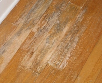 Mold and Mildew Flooring